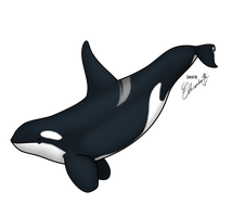 East North Atlantic orca bull by WolverineGuardian