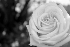 Black and White by Lilith1995
