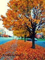 Deffinately in Season by Michies-Photographyy