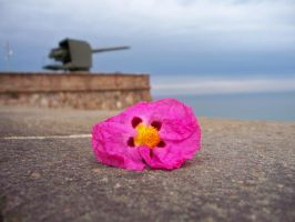 Flower and a Cannon by mlsterben