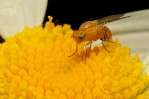 Yellow Fly by webcruiser