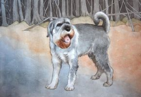 schnauzer by moussee