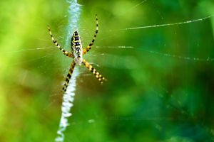 Spider by SnapShot120