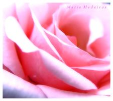 .PiNk RoSe. by CozyComfyCouch