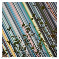 Diagonals by Aderet