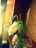 Snowdrop by Girlinsneakerss