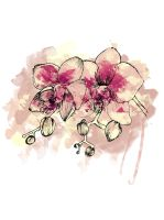 Orchid by olenka168
