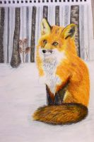 Fox on white snow by Giuliettadolce