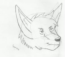 Canine Face Practice by MasterSorez