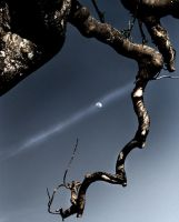 moon and dying tree.2 by semangatmembara