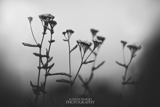 black softness. by MateuszPisarski