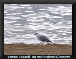Liquid Seagull by technologicallyinept
