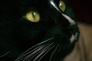 Up Close - Winston 2 by forseti-the-gray