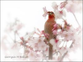 Bird in the Cherry Blossoms by ForeverCreative