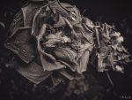 Withered Illusion by Weissglut
