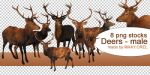 PNG STOCK SET: Deer 2 by MAKY-OREL