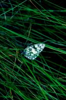 Summer 2010_Butterfly_1 by illusiondevivre