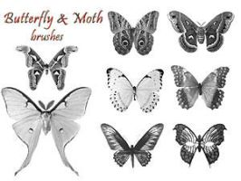 PS Brushes - Butterflies by par-me
