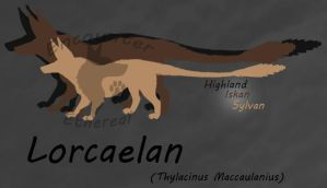 Lorcaelan Subspecies Size Reference by EncounterEthereal
