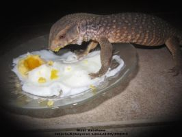 Badi My Savannah Monitor by RizalVardhana