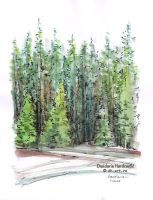 Sketchbook - Fir trees by dasidaria-art