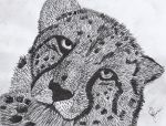 Cheetah v2 (pen and ink) by ArtBourne