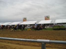 Preakness 2013: Racing by Anti-Bumblebee