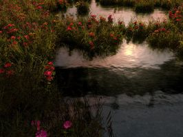 Water Poppies by athyrius1