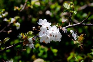 Blossoming tree #4 by theartofmike