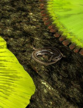 Common Skink by KenGilliland