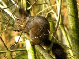 Squirrel in Spring by Agatje