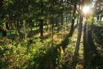 Sunlit Woodland by scotto