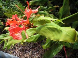 red plant by CRStock