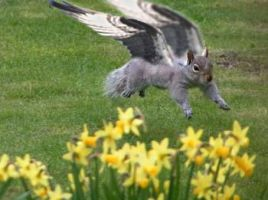 An Actual Flying Squirrel by jrem090