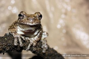 The Frog Prince by AnimalsAndNatureClub