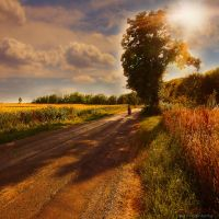 freedom by ildiko-neer