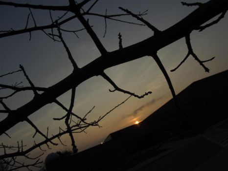Sunset Branches 3 by andrewblood