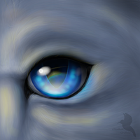 Eye and fur practice by Lizandre