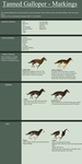The Tanned Galloper - Markings by TalonV