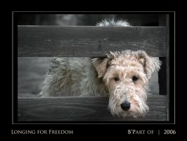 Longing for freedom by BPart