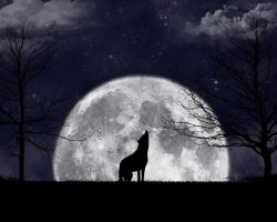Howling At The Moon by zanardo
