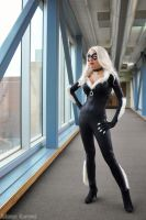 Black Cat: What's New Pussy Cat? by MomoKurumi