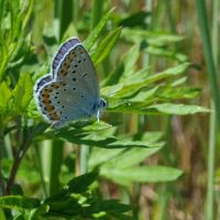 Blue butterfly by TinyWild
