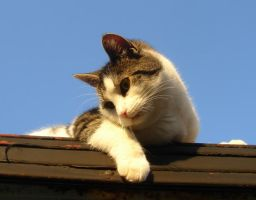 Cat On The Roof -Stock 1 by sadistik-stock