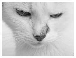 White Cat II by rafalhyps