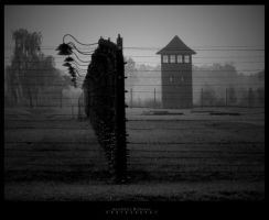 auschwitz by HereP