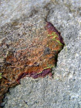 Rock surface and life. by jellybush