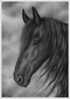 Black Horse Portrait for BCA by Zindy