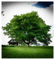 The Giving Tree by PurityOfEssence