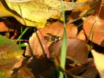 Wasp in the leaves by Ellaidathea